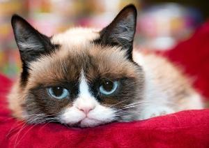 1402516187_grumpy-cat-zoom